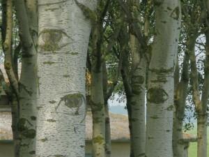 gli occhi degli alberi